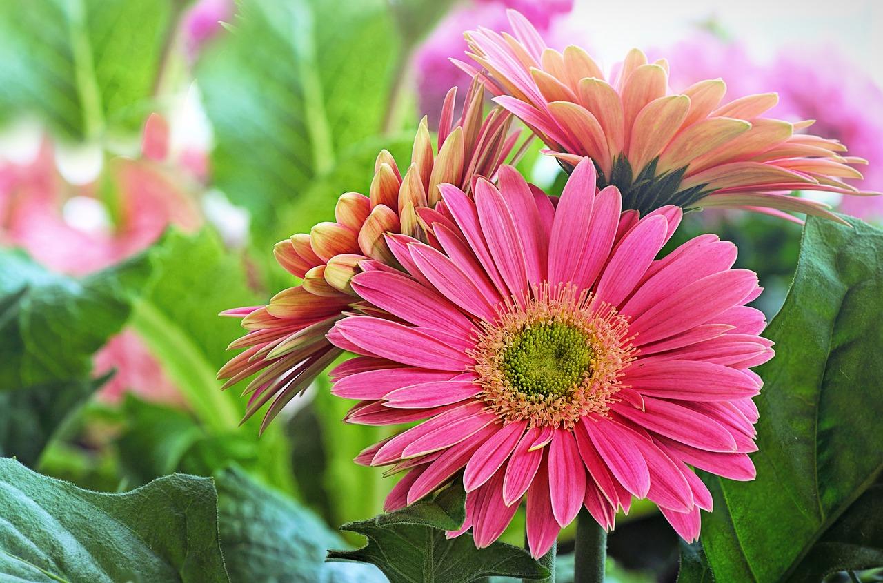 Květinové krabičky potěší každou ženu