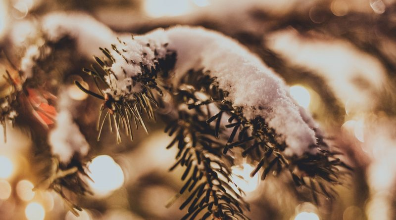 Spruce Snow Christmas Tree Winter  - ksyfffka07 / Pixabay